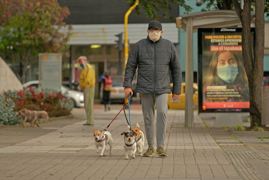 Los perros que «pasean» a sus dueños