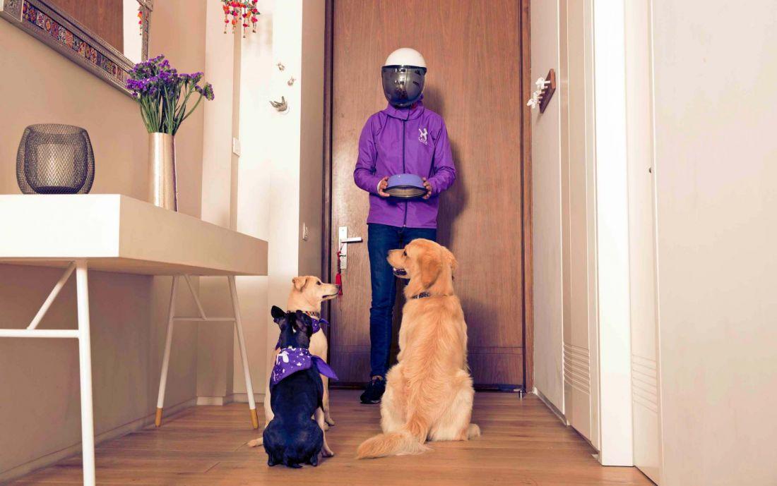 Laika, la plataforma digital que nació para atender a las mascotas