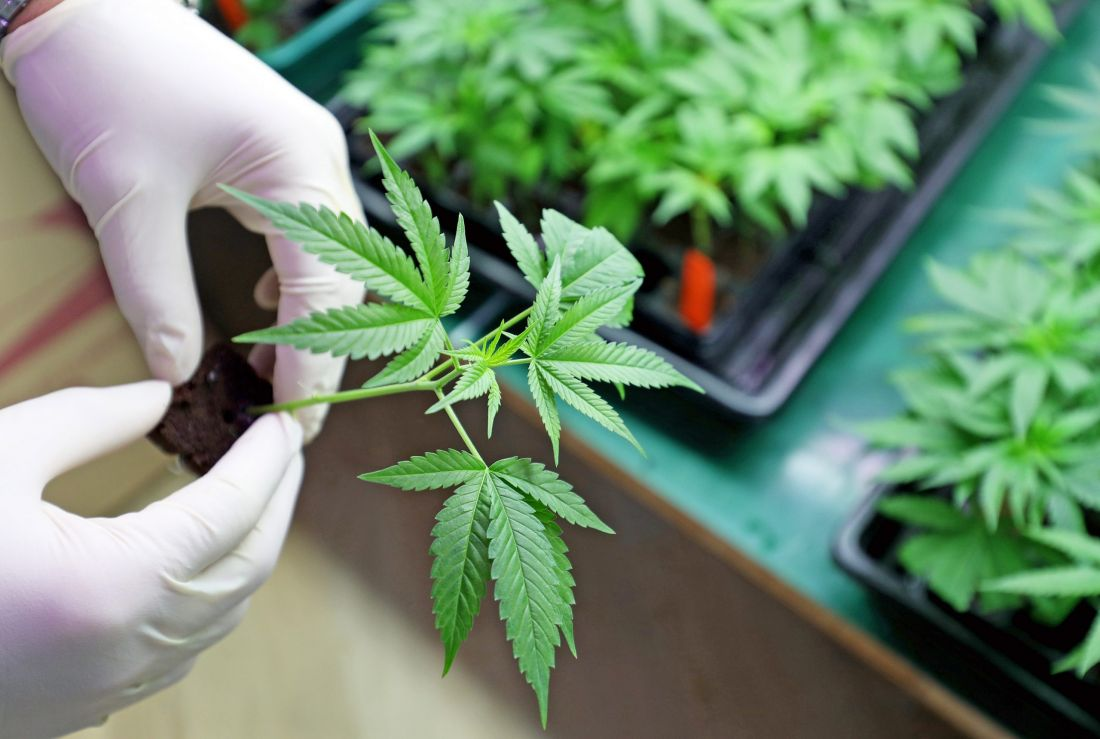 México, segundo país latinoamericano en aprobar el uso recreativo de la marihuana