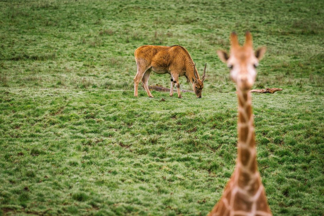 ¿Por qué se celebra el tres de marzo el Día Mundial de la Vida Silvestre?